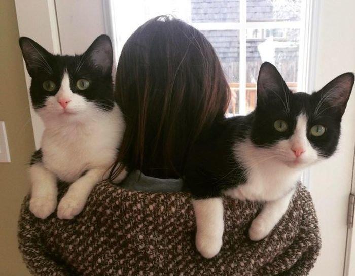 Кошачий фотопозитив коты, кошки, подборка
