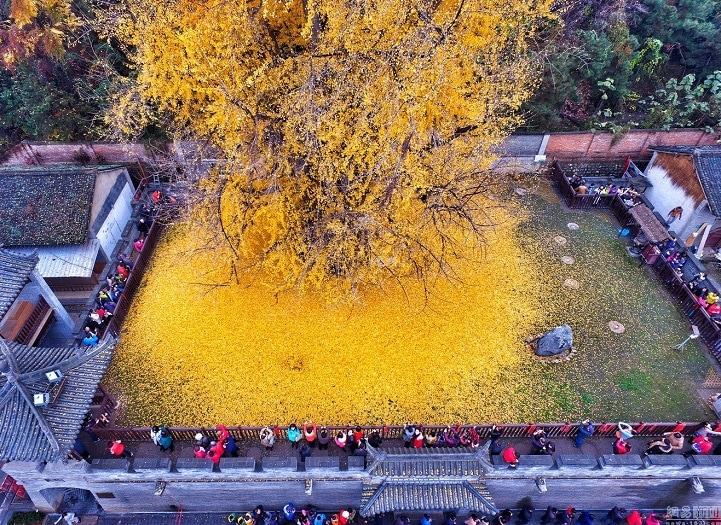Туристы со всей страны съезжаются посмотреть на это дерево
