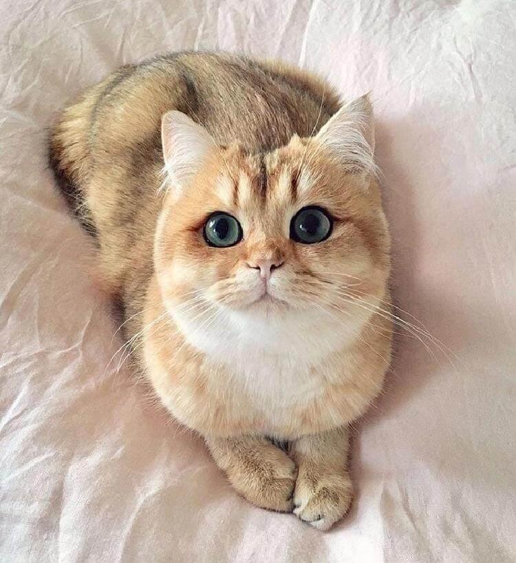 Красавицы-кошки во всей свое…