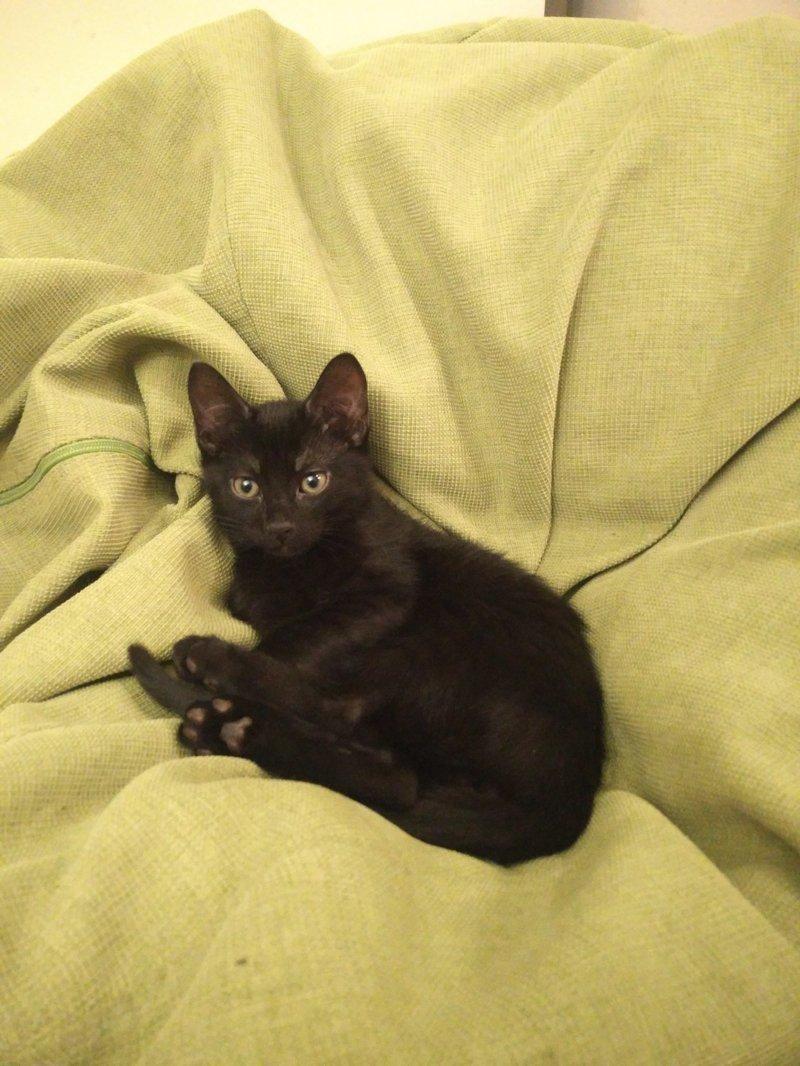 История одного кота животные, история, кот, черный кот