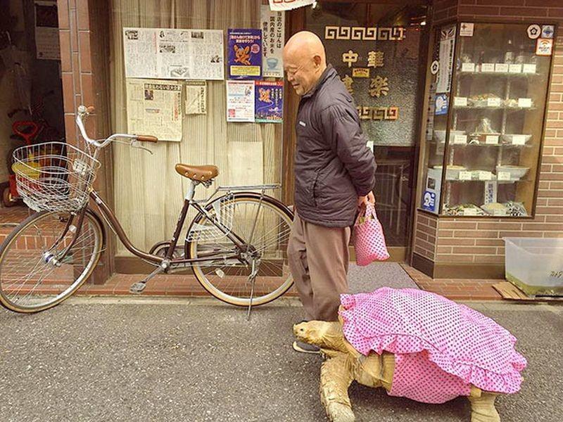 Не каждый может похвастать, что гуляет по Токио в компании большой черепахи