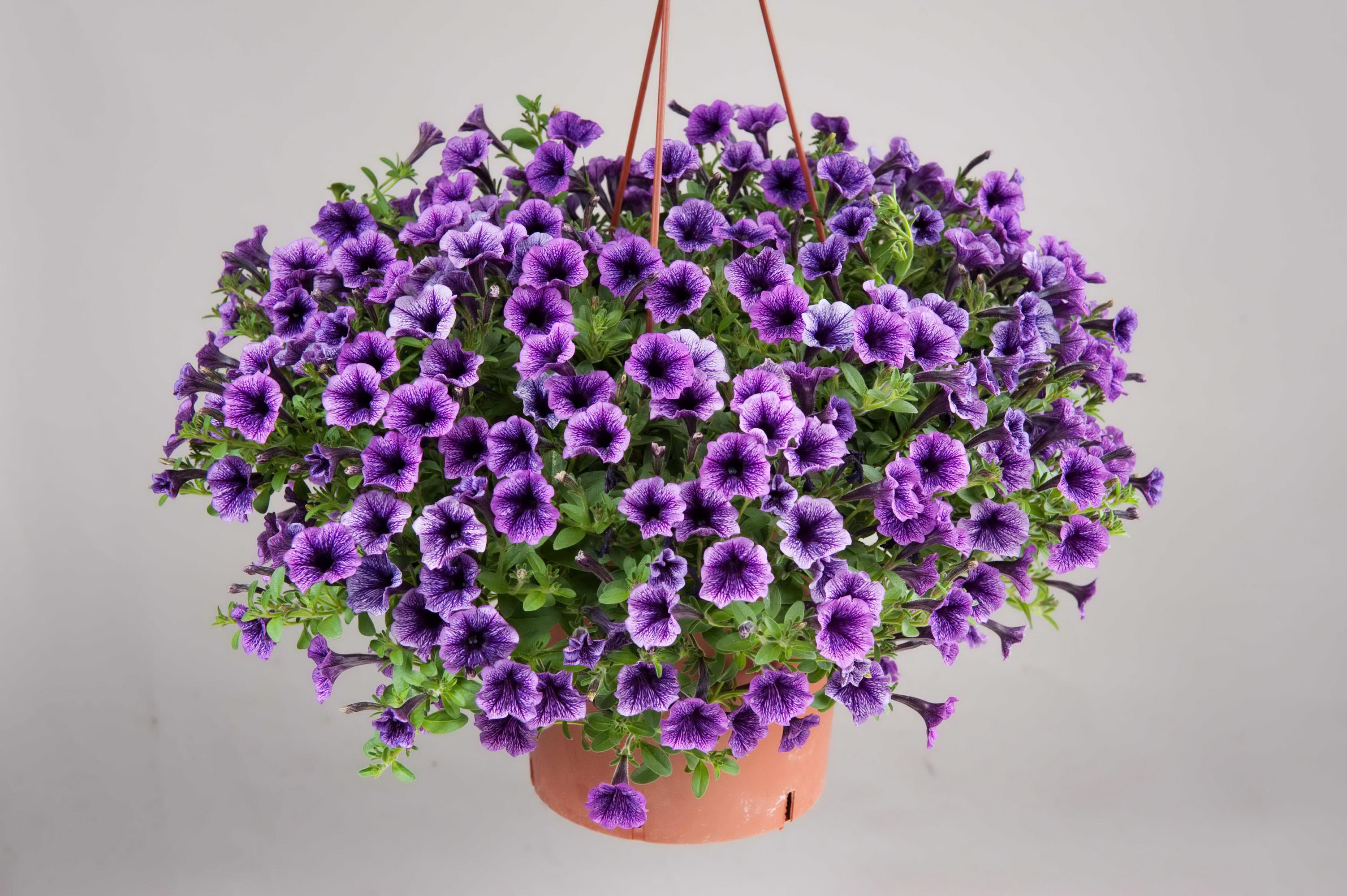 Универсальный рецепт удобрения для богатого цветения цветы
