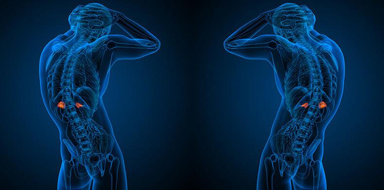 Здоровье надпочечников: Почему после стресса важно позаботиться о себе в течение 2–3 дней