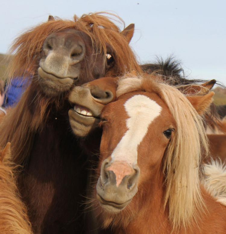 приколы картинки с лошадями несколько способов
