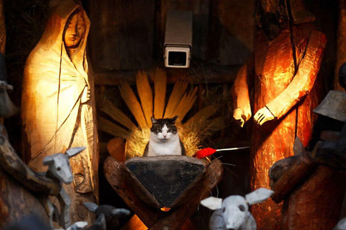 Коты и Рождество домашние животные,наши любимцы