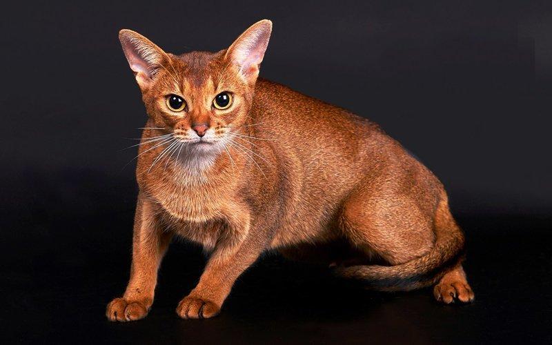 Интересные факты о котах и кошках животные, коты, факты