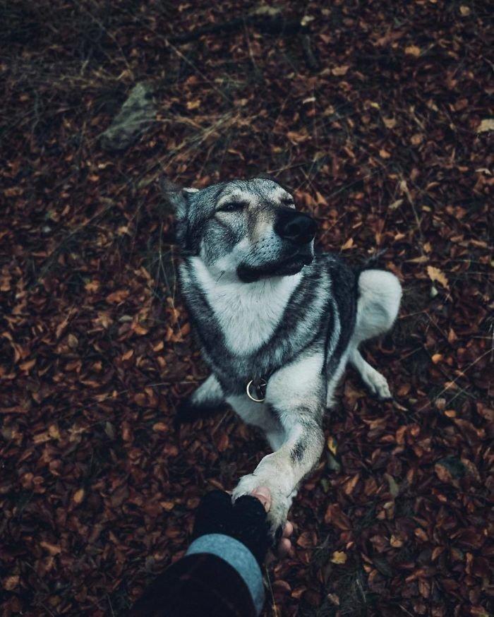 17. follow me, инстаграмм, собака, собака - друг человека, флешмоб, флешмобы. instagram, фото природы, фотограф
