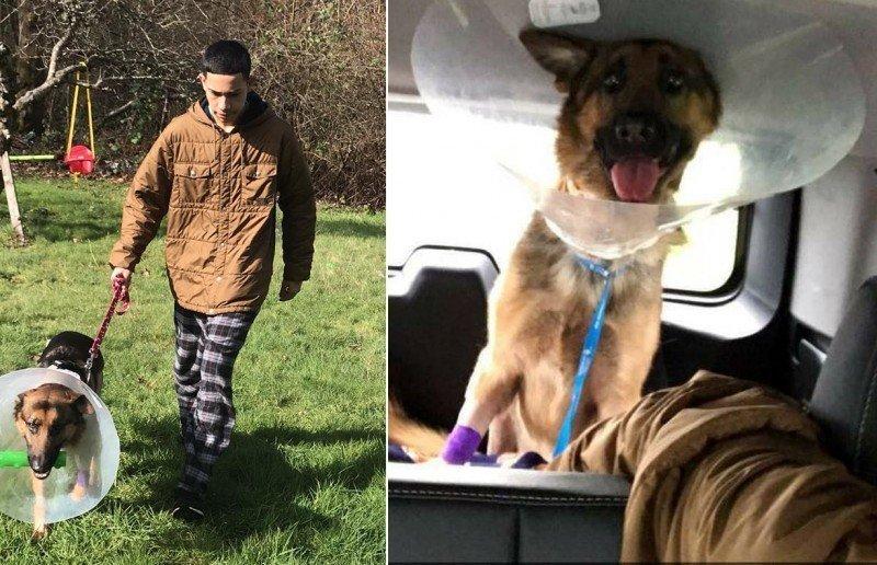 Собака - герой грабители, защитник, собака