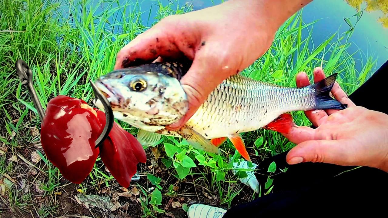 Рыбалка на Ханке