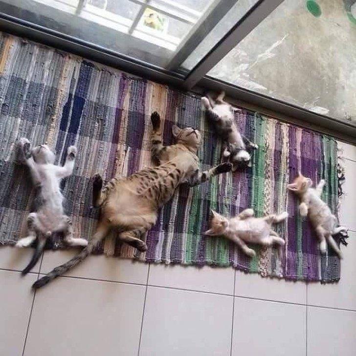 С генетикой не поспоришь животные, коты, настроение