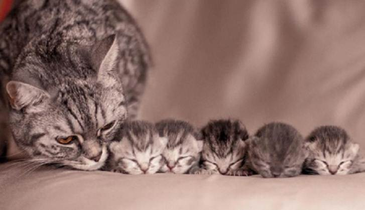 История от одного кошатника — как в короткие сроки пристроить котят в хорошие руки