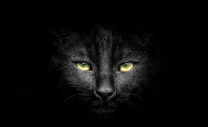 Чёрного кота пост