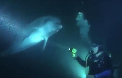 Дайвер плавал на Гавайях - и тут к нему подплыл дельфин и попросил о помощи