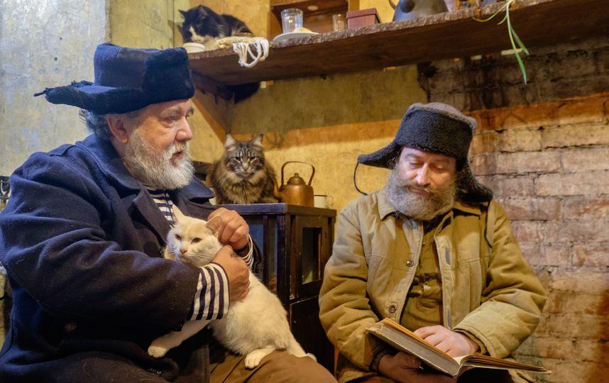 Эрмитажные коты стали артистами