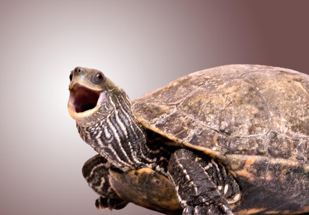 Черепахи не стареют?..