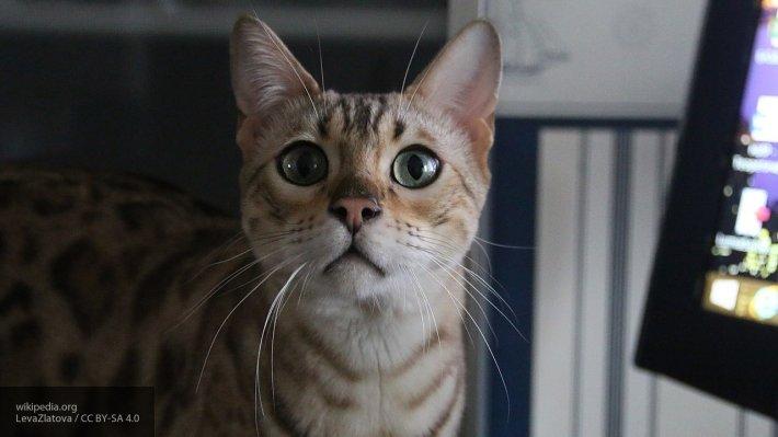 Питомец-спаситель: кошка пом…