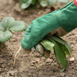 Когда сорняки в огороде на пользу