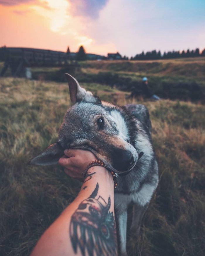 19. follow me, инстаграмм, собака, собака - друг человека, флешмоб, флешмобы. instagram, фото природы, фотограф