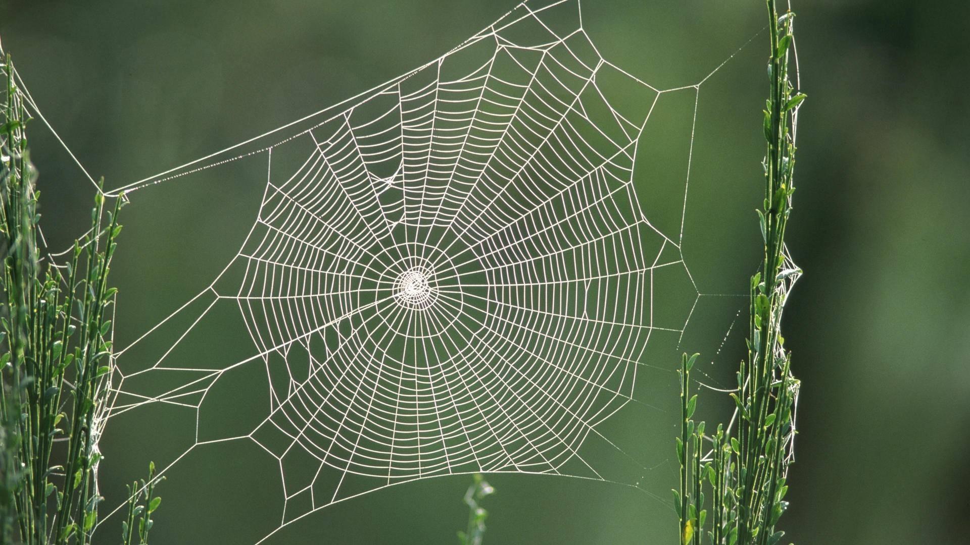 Почему паук не путается в своей паутине?