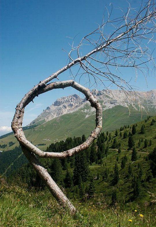 E as poucas árvores que a vida gerou árvores, incrível, natureza, incrível, flora