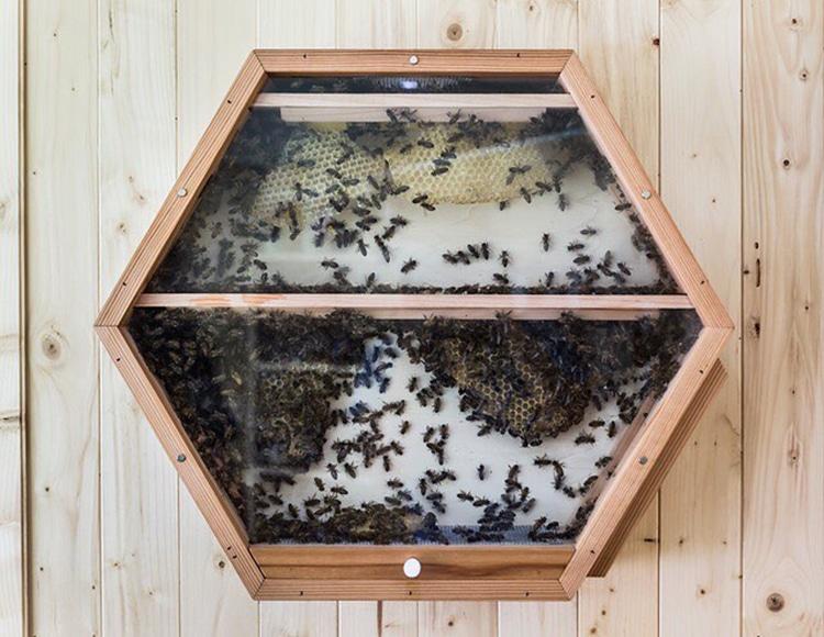 Очень креативная идея: установите улей для пчел прямо на стене