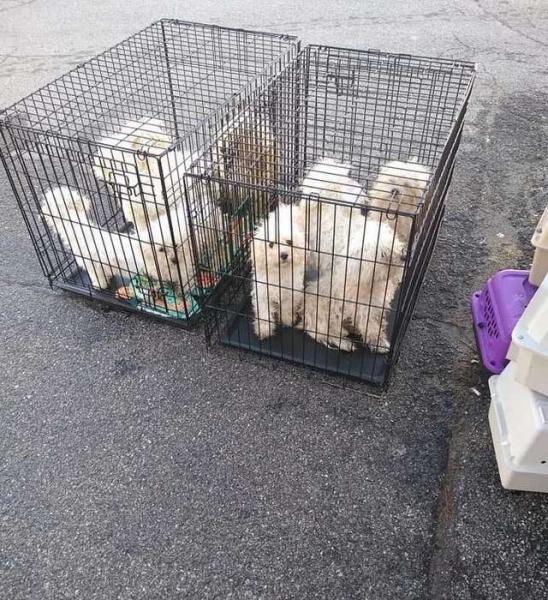 9 собак засунули в клетки и …