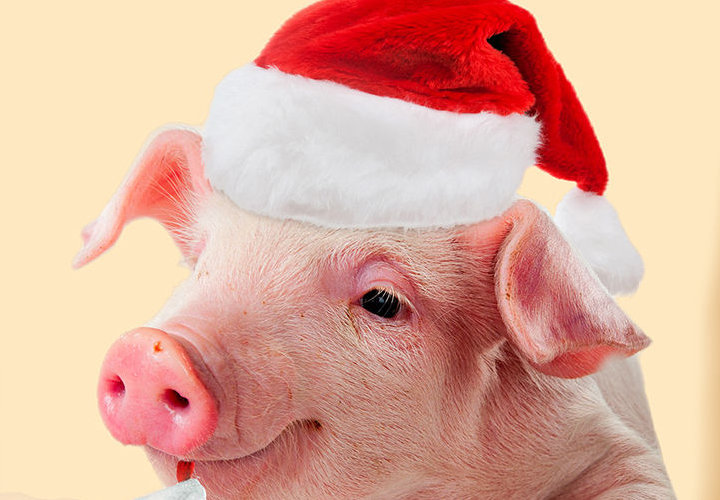 картинки нового года свиньи нужно тратить