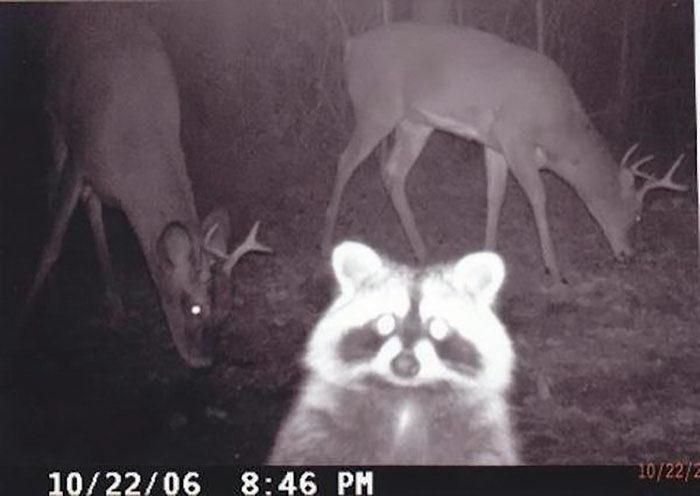 Скрытые камеры в лесу. Вот чем действительно занимаются звери ночью и днем