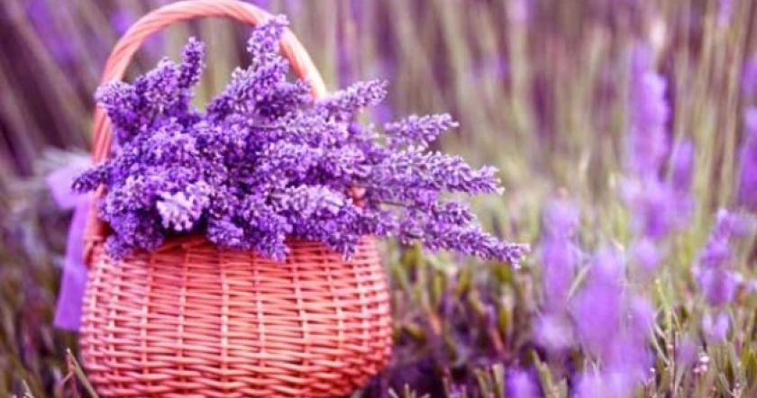 6 комнатных растений для ваш…