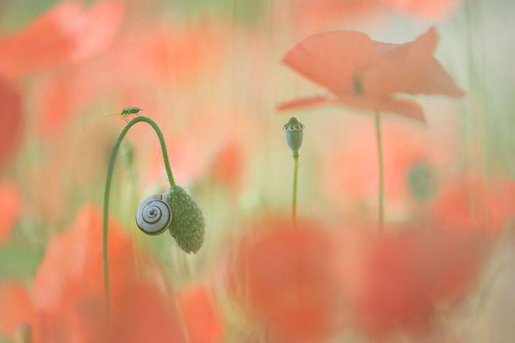 Работы победителей конкурса «Лучший садовый фотограф 2018 года»