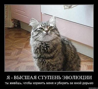 Смешные истории...улыбнемся?:))