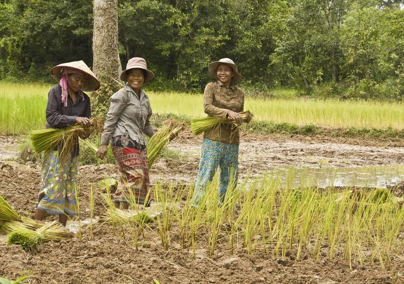 В ожидании трудовых резервов: Климат в Сибири к 2080 году станет пригодным для выращивания риса и винограда