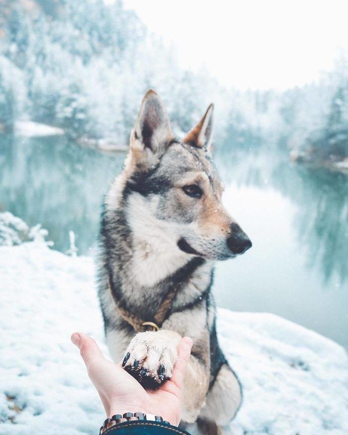 3. follow me, инстаграмм, собака, собака - друг человека, флешмоб, флешмобы. instagram, фото природы, фотограф