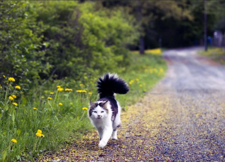 Одинокий странник животные,Истории из жизни,отношения,позитив
