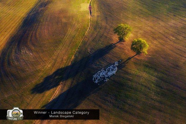 Победители конкурса на лучшую фотографию природы Nature TTL Photographer of the Year 2020 конкурсы,фотографии