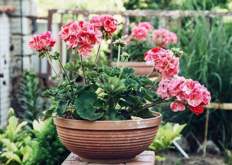 комнатные растения для дома