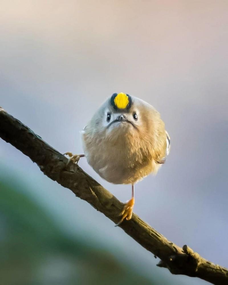 Прикол про птиц картинки