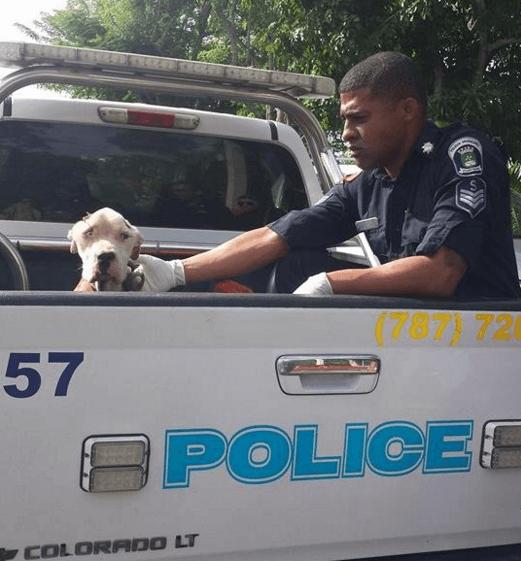 Хозяева довели пса до состоя…