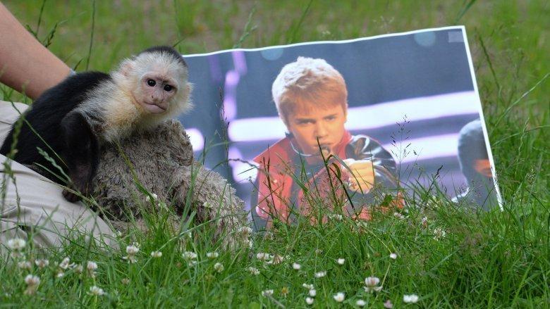Джастин Бибер и обезьяна-капуцин в мире, животные, закон, звезды, знаменитости, экзотика