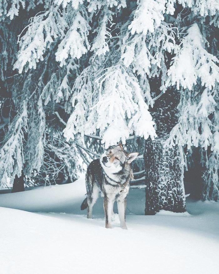 14. follow me, инстаграмм, собака, собака - друг человека, флешмоб, флешмобы. instagram, фото природы, фотограф