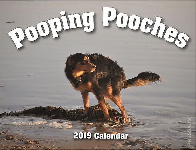 Не каждый поймет... Шутливый календарь для собачников на 2019 год