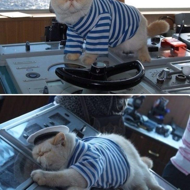 Корабельный кот Фрол