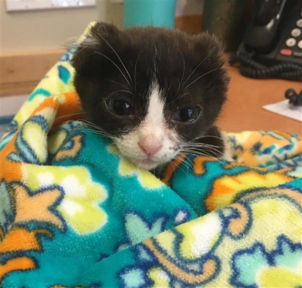 Безухий котенок попал в приют! Он не мог верить людям, но однажды ему подарили шапочку