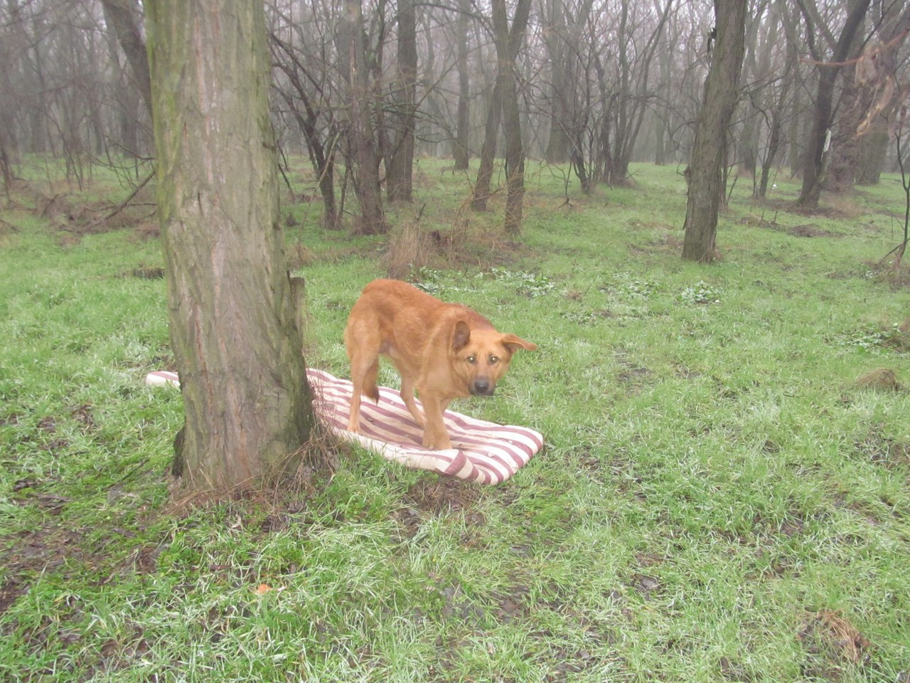 Пёс лежал на матрасе, который выбросили вместе с ним...