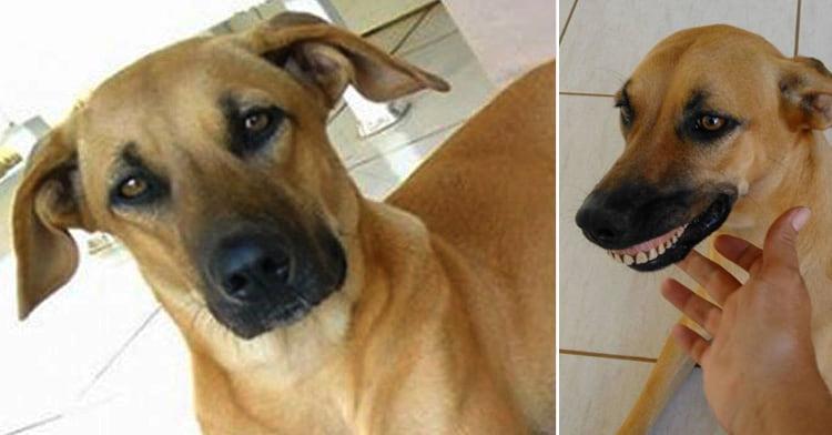 Собака устроил «раскопки» на заднем дворе. Когда он вернулся со своей находкой — хозяин чуть не лопнул от смеха!