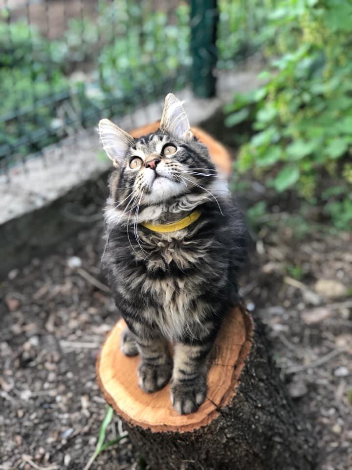 Как и где искать пропавшую кошку? домашние животные,наши любимцы