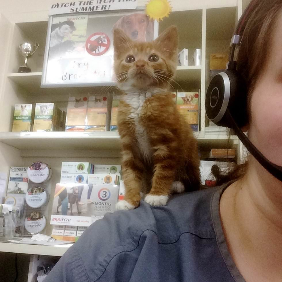 Рыжий котенок, который никогда не вырастет в большого кота, все равно счастлив в своей семье картинки