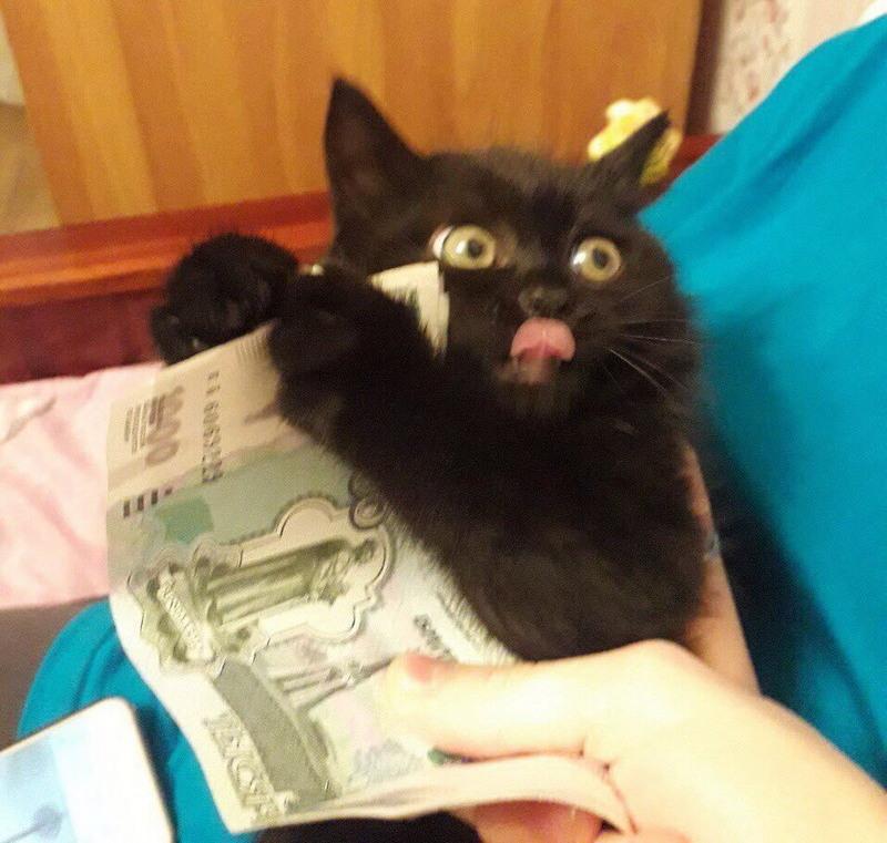Ну такие забавные котики!