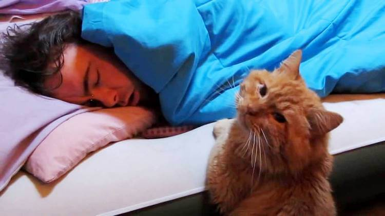 Каждое утро в 05:00 кот буди…