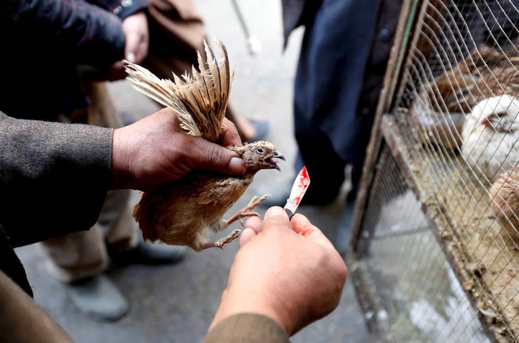 Фотопроект о птичьем рынке в столице Афганистана